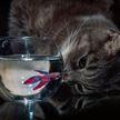 «Она ждет, что хозяйка положит рыбку обратно»: кошка забралась в аквариум и умилила сеть (ВИДЕО)