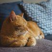 Хозяин решил проследить за котом, но тот разгадал план и поразил всех (ВИДЕО)
