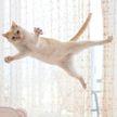 От балета до брейк-данса: танцующий кот Чако из Японии взорвал Instagram