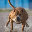 Бойцовский пёс покусал 7-летнюю девочку в Гродно. Местные жители обеспокоены – это не первый случай