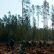 Последний день марафона «Неделя леса 2021» собрал рекордное количество желающих посадить дерево