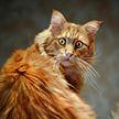 Кот спустился с пианино и собрал около 9 миллионов просмотров