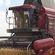 Первый миллион тонн зерна убрали на Брестчине