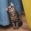 Я бы не смогла уйти! Кот просит хозяйку остаться дома. Только посмотрите, как он это делает – пользователи Сети растроганы! (ВИДЕО)