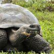 5 долгожителей животного мира. Кто же эти существа?