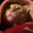 Коронавирус и питомцы: как защитить домашнее животное