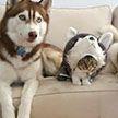 10 фото зверей, которые отлично маскируются! Сможете найти кота на третьем снимке?