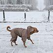 Гололедица и до +7°C: погода на 22 февраля