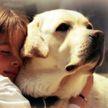 12 тихих, но очень красивых пород собак