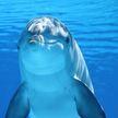 В Таиланде сняли редких дельфинов-альбиносов (ВИДЕО)
