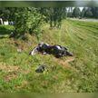 21-летний мотоциклист без прав разбился в Фаниполе