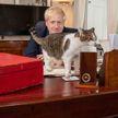Премьер-министр Великобритании поздравил главного мышелова страны с Международным днем кота