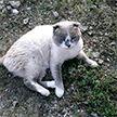 Россиянин продаёт кота-экстрасенса за 73 тысячи долларов