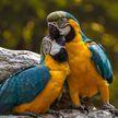 Голландская компания до смерти напугала попугаев и получила за это штраф