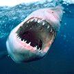Не вздрогнуть невозможно: акула зубами сорвала маску с дайвера (ВИДЕО)