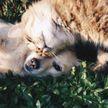 В Минске бездомным животным помогут найти хозяев в Telegram