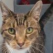 Чихающий кот ищет хозяев в Великобритании