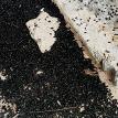 Миллион зловонных жуков выгнал семью из дома