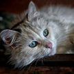 Кот пытался пролезть в форточку и рассмешил сеть