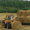 Как в Витебской области собирают урожай и готовятся к «Дожинкам»