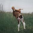 Собака решила поиграть в бобовом поле и развеселила Сеть (ВИДЕО)