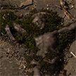Украдены 5 надгробий с могил известных могилёвских государственных деятелей и городской знати 18 века.  Общий ущерб – 12,5 тысяч рублей