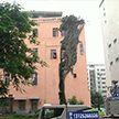 Фотофакт: дерево проросло через жилой дом