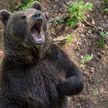 Мужчина выжил после схватки с медведем в лесу