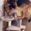 «Мастер маскировки»: пёс притворился котом и заставил хохотать соцсети (ВИДЕО)
