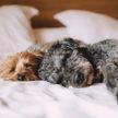 Чудеса дрессировки: послушные собаки впечатлили Сеть (Видео)