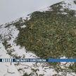 В Гомеле задержан наркодилер, у которого изъято более 5 кг марихуаны