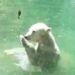 Медведь пытался «оживить» птицу, которую принесли ему на обед