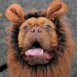 Хэллоуин-парад собак прошёл в Нью-Йорке (ФОТО)