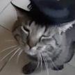 Москвичи обнаружили в своем подъезде кота с расческой и запиской. В ней бывшие хозяева указали, что животное «очень любит чесаться»