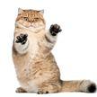 Кот украл еду из кухонного шкафчика и попал на видео – эти кадры можно пересматривать бесконечно!