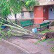 В Минске ветер повалил деревья на проезжую часть