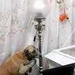 Видео, которое нельзя смотреть без слёз: собака прощается с покойным хозяином