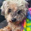 В Техасе нашли и вернули хозяевам собаку, пропавшую перед ураганом в 2017 году