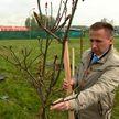 Белорусские энергетики заложили первую аллею на месте будущего экопарка