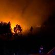 В Португалии задержали подозреваемого в поджоге леса. Огонь уже уничтожил более 3 тысяч гектаров насаждений