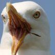 Испортили всю романтику: чайки попали на видео влюбленной паре