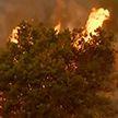 Из-за лесного пожара под угрозой уничтожения находится знаменитый город Санта-Барбара