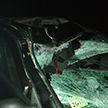 Очередное ДТП с животным: лось выскочил наперерез легковушке под Витебском, пострадала пассажирка