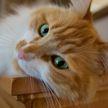 Вы такое видели? Кот очень странно кричит после того, как поест. Пользователи Сети в недоумении (ВИДЕО)