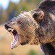 В Канаде турист с ножом отбился от нападения медведя гризли