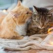 Кот принес мышь на свидание своей возлюбленной и восхитил Сеть
