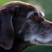Очень приветливый пес рассмешил интернет (ВИДЕО)
