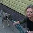 Собаку, которую ещё щенком выбросили на трассе под Минском, забрали новые хозяева