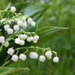 Смертельно красивые! 11 самых опасных растений в Беларуси 🌱