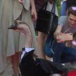 Свадьба знаменитого дрессированного гуся Харвистера состоялась в Минске
